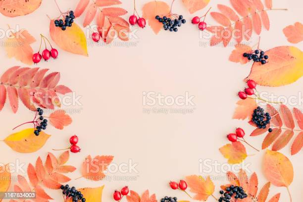 Flat lay frame with colorful autumn leaves and berries on a color picture id1167634003?b=1&k=6&m=1167634003&s=612x612&h=rxv2iyqoybxnkouopw9hrsy 95gorsed43knrei k4m=