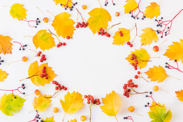 Flat lay frame with colorful autumn leaves and berries on a white picture id1164753918?b=1&k=6&m=1164753918&s=612x612&w=0&h=lnuttohgylqwgm7xn8ookucfddbbp9f6ycjrh0xlwjs=