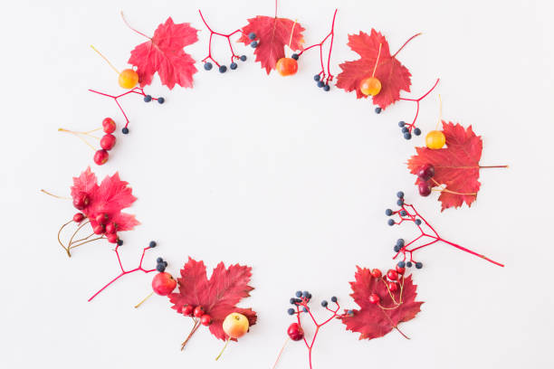 Flat lay frame with colorful autumn leaves and berries on a white picture id1165769383?b=1&k=6&m=1165769383&s=612x612&w=0&h=altxhplgsucrkooceksjtczbyp71nawfnnht5syyrgi=