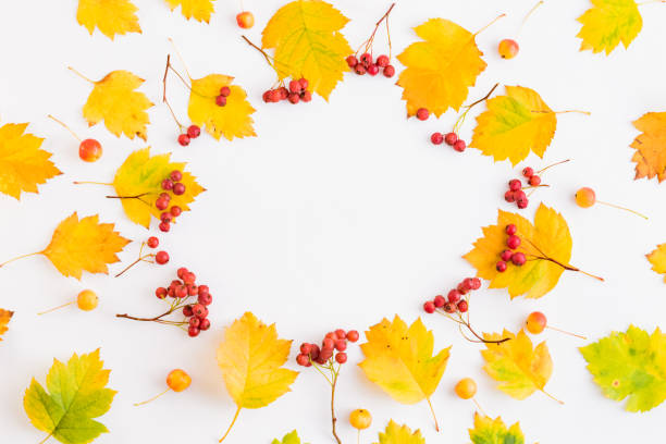 Flat lay frame with colorful autumn leaves and berries on a white picture id1165769395?b=1&k=6&m=1165769395&s=612x612&w=0&h=wk 6pdykpdws7odfgsc6af5ar805pgszejknyhdvtuy=