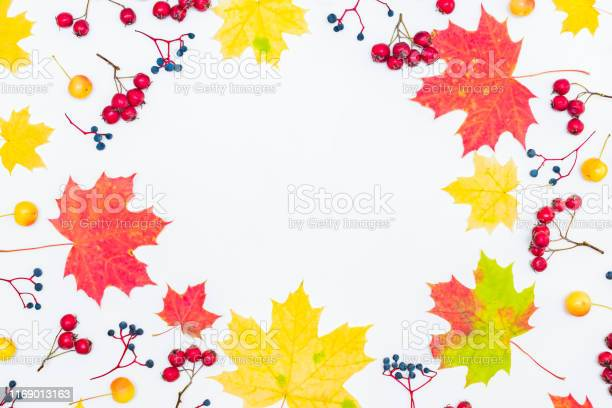 Flat lay frame with colorful autumn leaves and berries on a white picture id1169013163?b=1&k=6&m=1169013163&s=612x612&h=5alvcipd yqqzeds3kuvnflwdlghyedzlcmyzaswfxg=