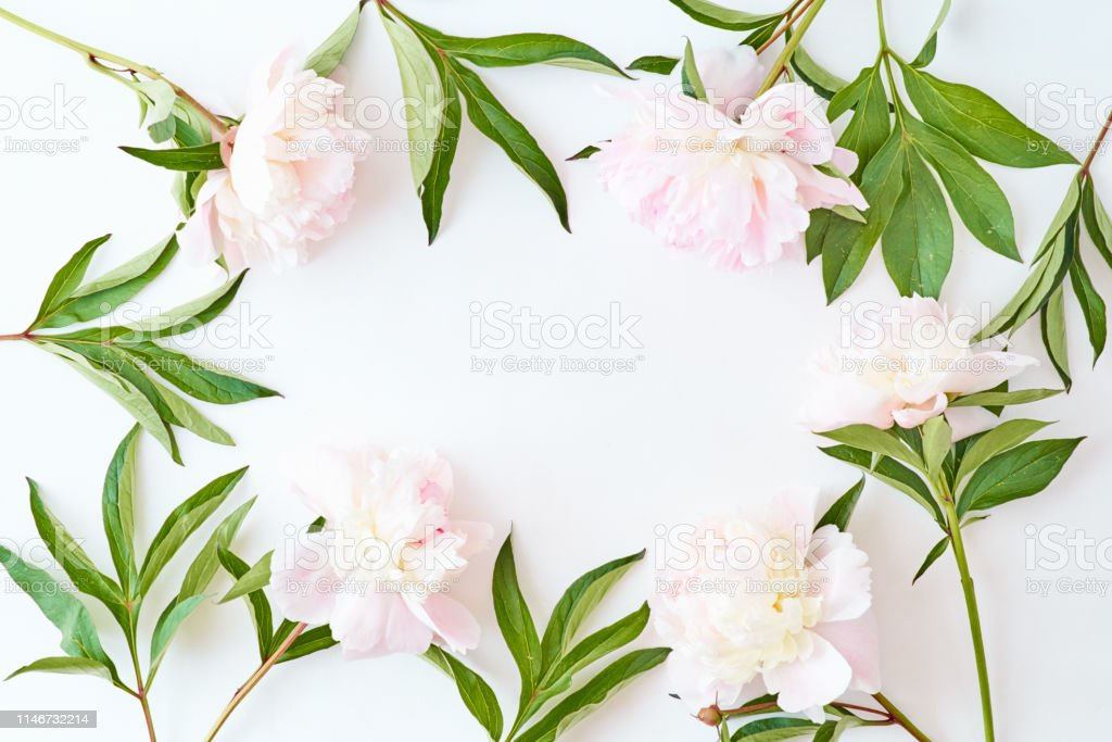 Flat lay frame with light pink peonies on a white background