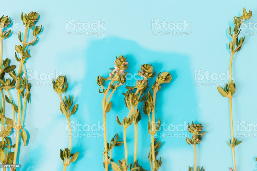 Flat lay fresh thyme sprigs on blue background, top view royalty-free stock photo