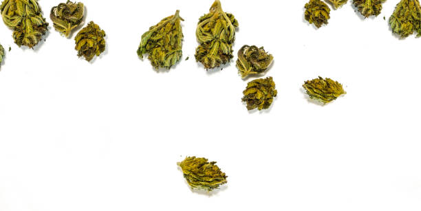 Flat lay of Cannabis flower buds on white background stock photo
