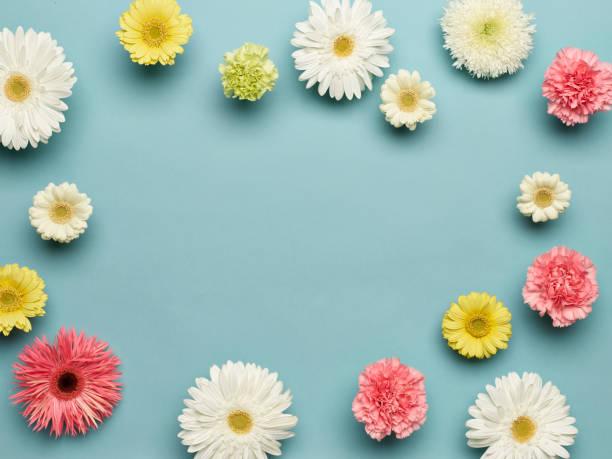 Flat lay of flowers gerbera carnation with pink green and yellow on picture id1133654789?b=1&k=6&m=1133654789&s=612x612&w=0&h=2p39oqjedrpxqcgovigrvo6kiidwkh5hx6h0oycs18e=
