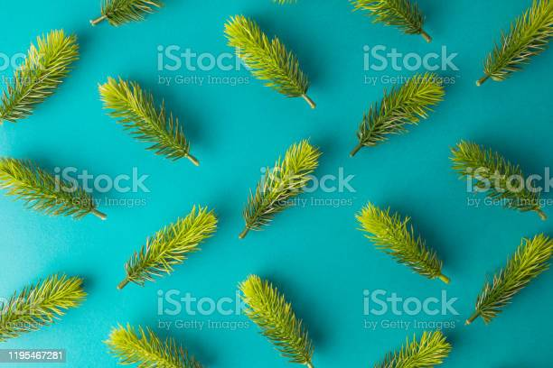 Photo of Flat lay of green fir tree branches winter season abstract.