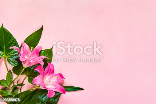 Flat lay of lilium flowers and green leaves over pink backgroung. Copy space.