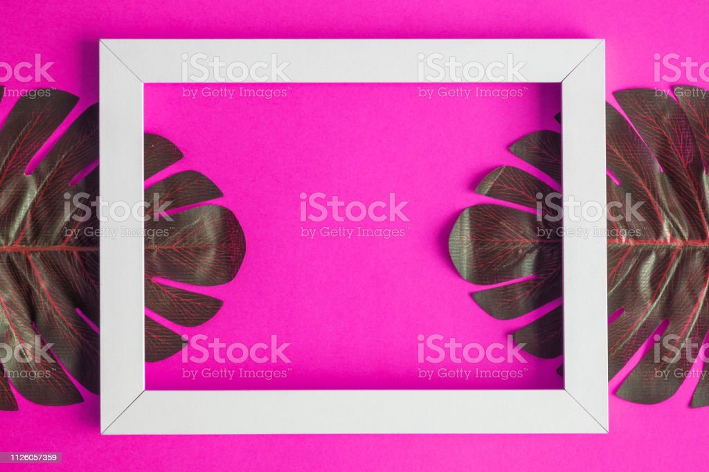Tropical monstera leaves with white frame isolated on pink background...
