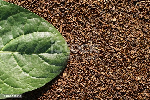 Flat lay of  Tobacco green leaf on dry cut tobacco leaf as background  with copy space in minimal style, template for lettering, text or your design