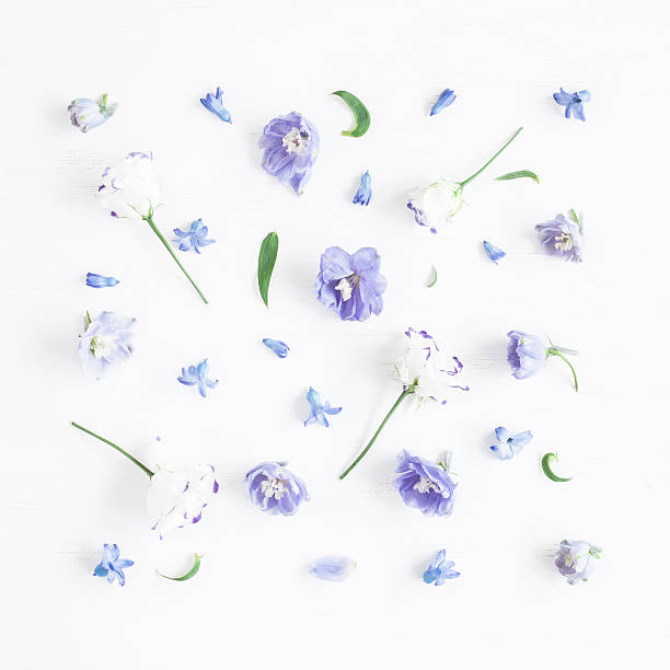Flat lay Pattern made of lilac flowers - Photo
