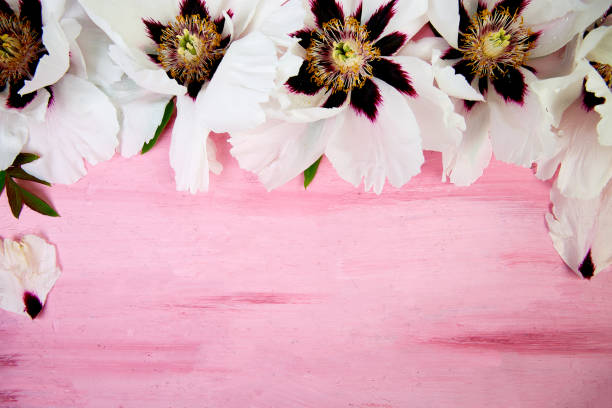 Flaches Laienmuster aus Weiß auf rosa Hintergrund. – Foto