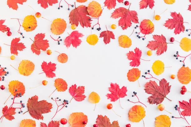 Flat lay pattern with colorful autumn leaves and berries on a white picture id1164753906?b=1&k=6&m=1164753906&s=612x612&w=0&h=frj9qqitmu5vntvbfsopyatnrin wc2z9dxl2 org6o=
