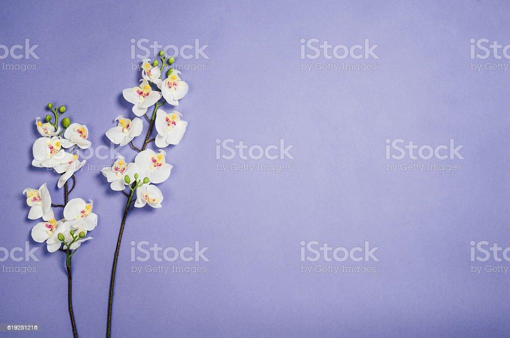 Flat lay photo of a creative freelancer woman workspace desk stock photo