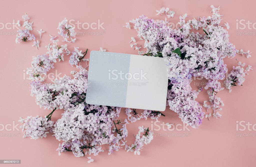 Flat lay postcard with lilac flowers on pink background, top view royalty-free stock photo