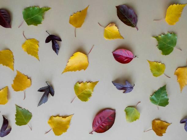 vista plana de las hojas de otoño brillantes sobre un fondo pastel de color con espacio de copia. composición creativa del concepto de otoño. plantilla maqueta viernes negro, acción de gracias, halloween. - black friday sale fotografías e imágenes de stock
