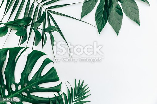 istock Flat lay trendy Tropical summer background, fern leaves set in the frame around blank space for a text 948011746