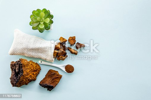 Flat lay view wild natural chaga mushroom, Inonotus obliquus powder and pieces for making tea and coffee. Healthy herbal plant based medicinal food supplement concept.