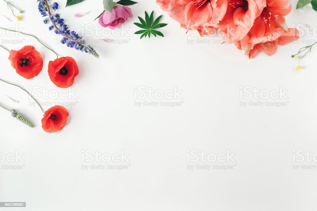 Flat lay wildflowers, poppy, amaryllis, peonies on white background with border, top view royalty-free stock photo