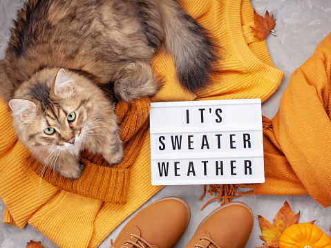 istock Flat lay with comfort warm outfit for cold weather. Comfortable autumn, winter clothes shopping, sale, style in trendy colors idea 1058036490