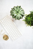 Flat lay with computer key board and suculent plants
