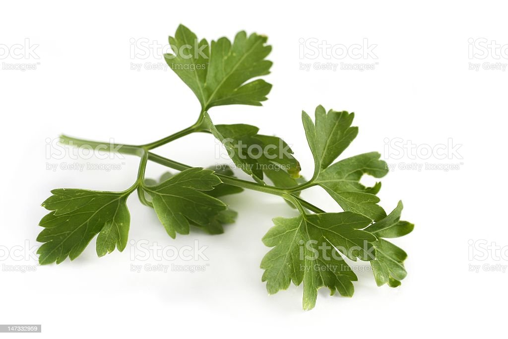 Flat leaf parsley royalty-free stock photo
