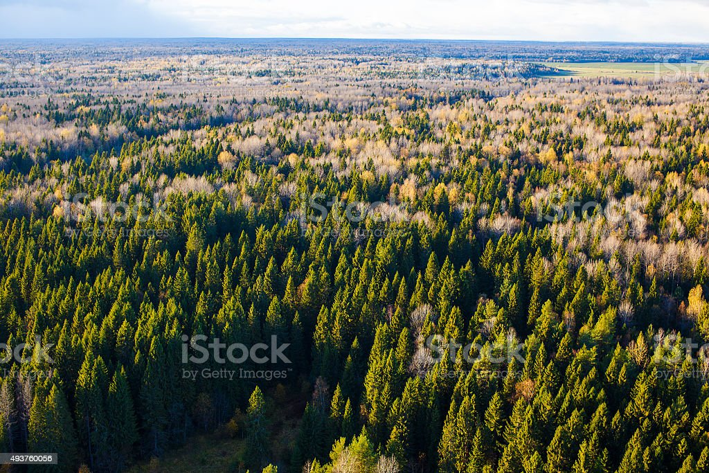 flat plain with autumnal forest aerial view stock photo