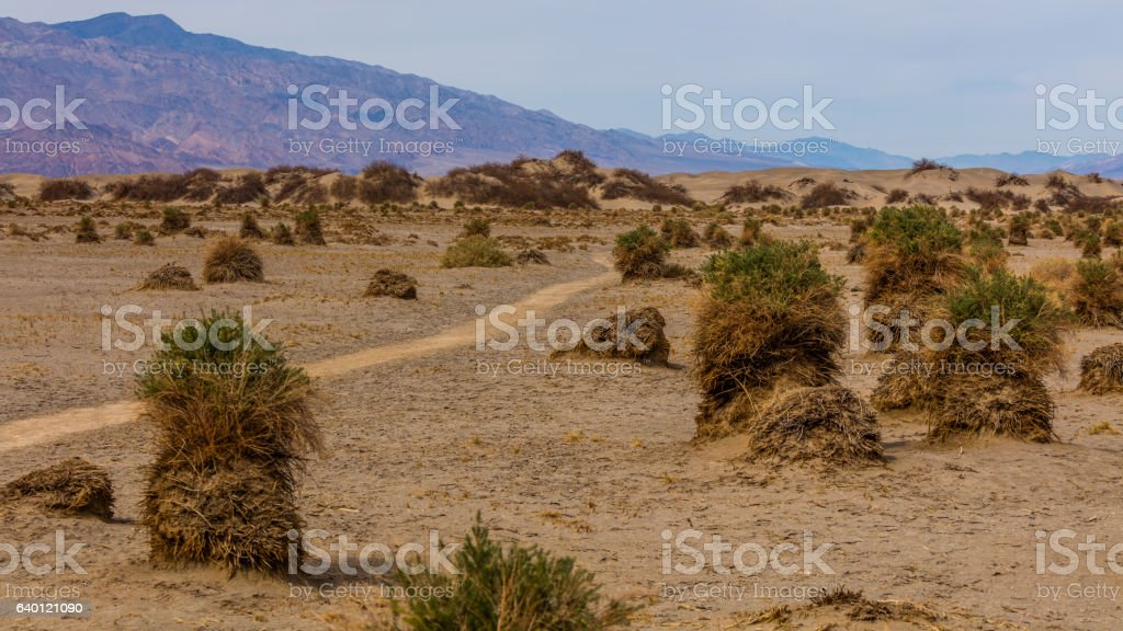 Flat sandy areas with creosote bushes. stock photo