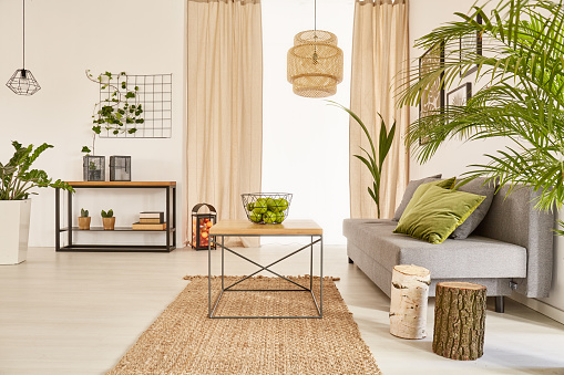 istock Flat with plants and couch 642242204