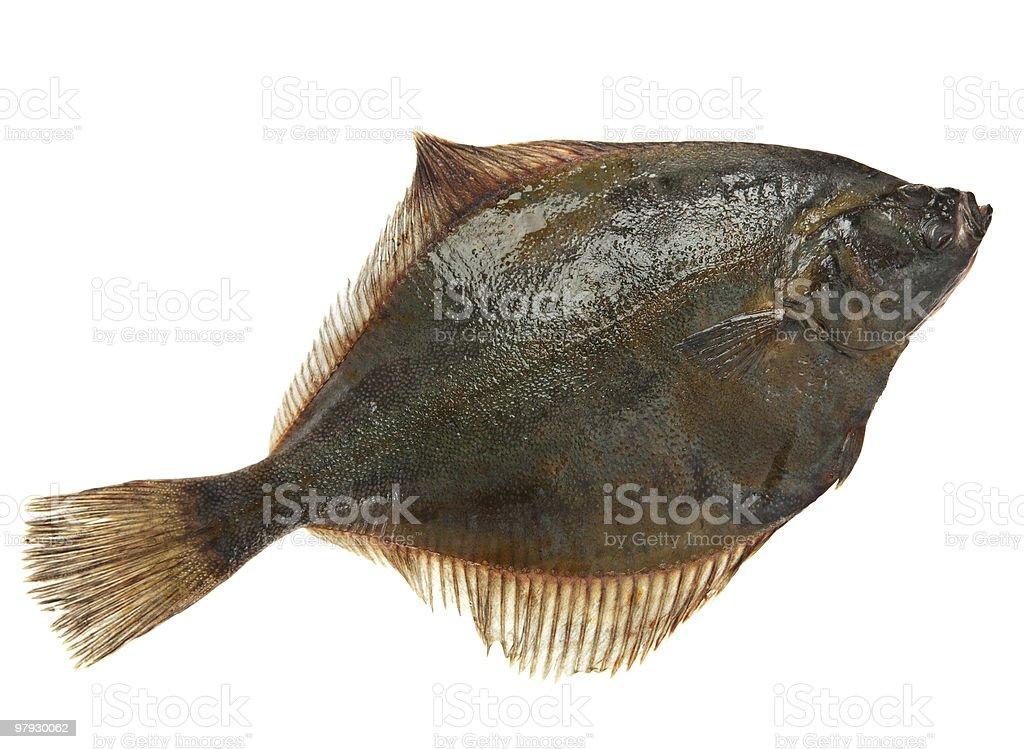 Flatfish royalty-free stock photo