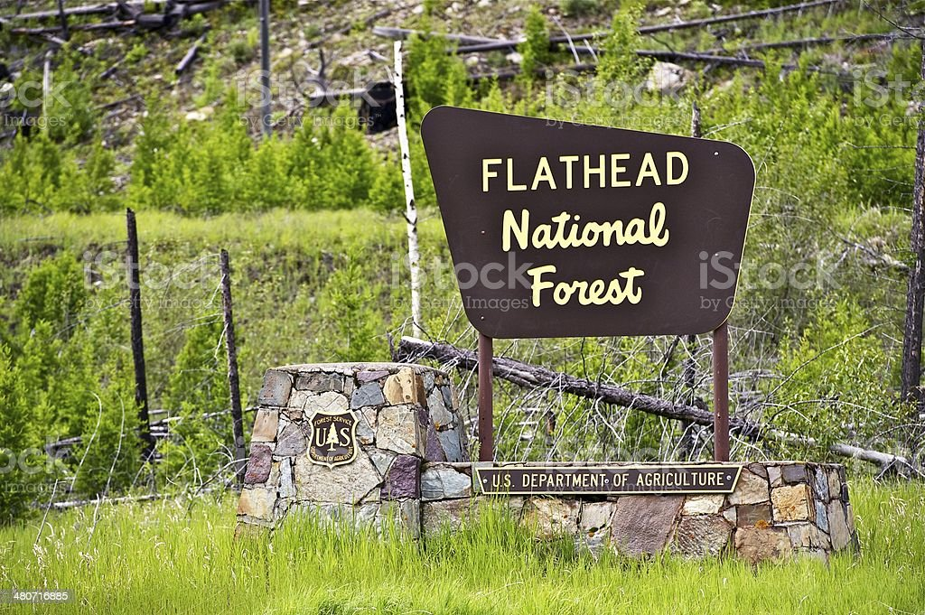Flathead National Forest stock photo