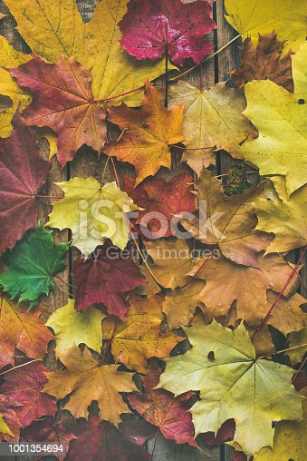 istock Flat-lay of colorful fallen maple leaves on wooden background 1001354694