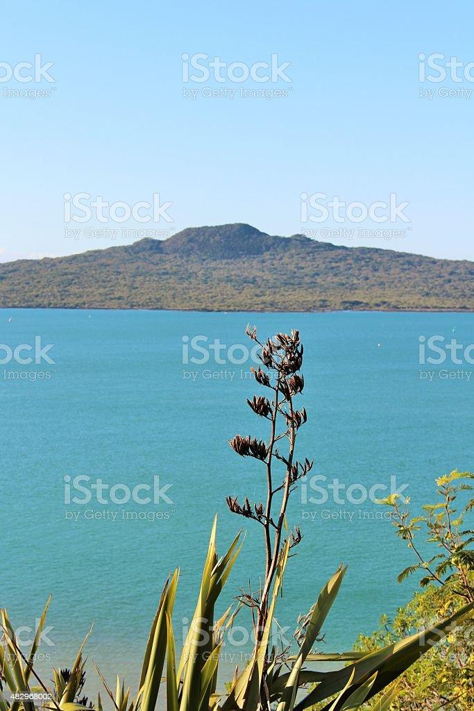 Flax and Rangitoto stock photo