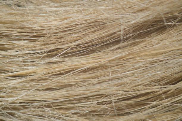 flachsfaser, wie sie in der papierindustrie und bei der herstellung von leinentuch verwendet wird - rauhfaser stock-fotos und bilder