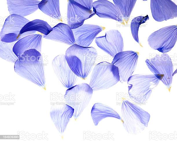 Flax flower petals picture id154926393?b=1&k=6&m=154926393&s=612x612&h=o2qibjyaf5yfdp87fsrmeut2tjxy qzrpz55hzlvxc0=