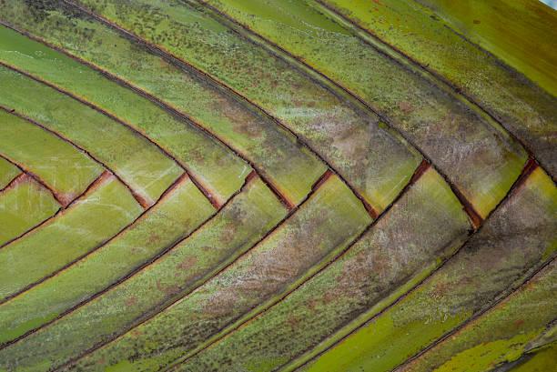 flax tree trunk stock photo