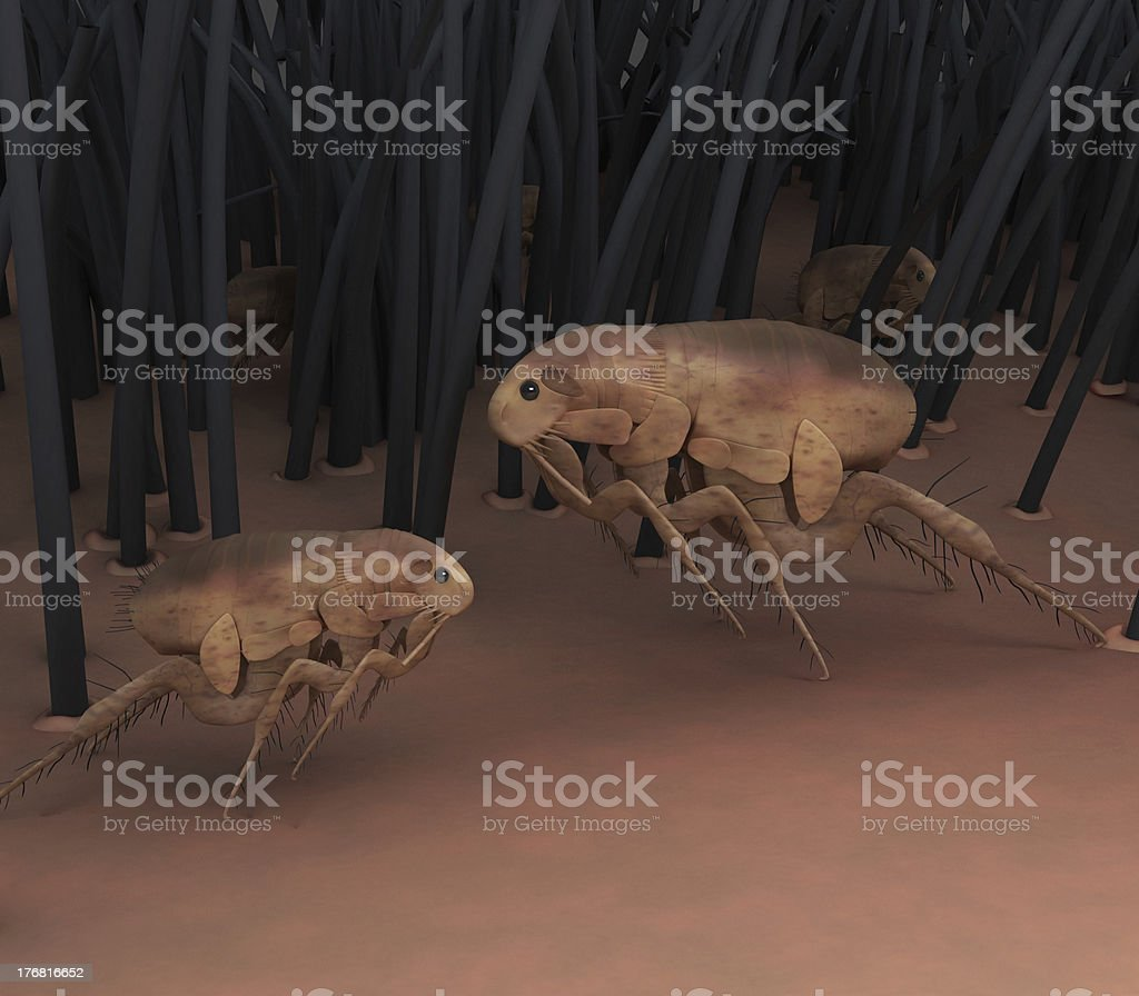 Fleas stock photo