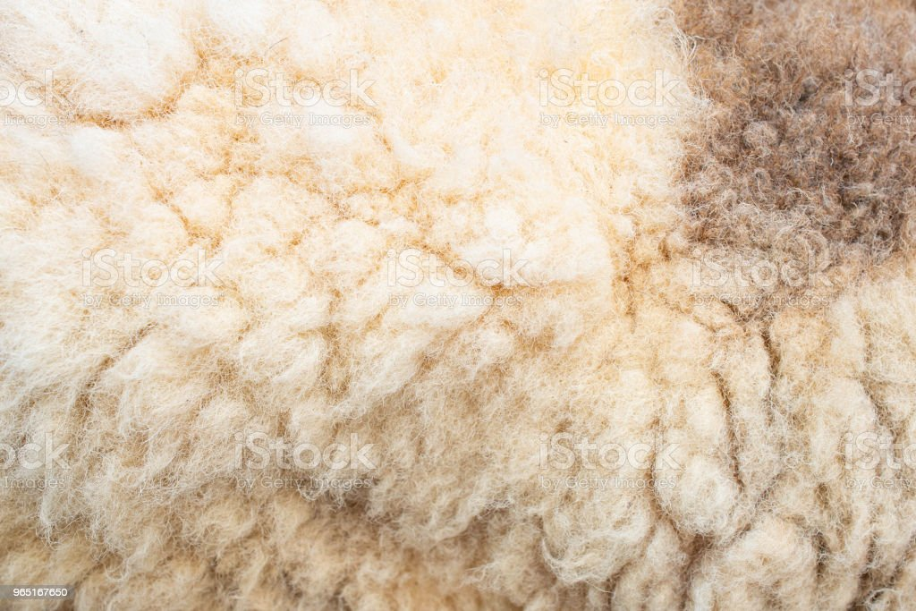 Fleece or sheep, wool sheep for background. royalty-free stock photo