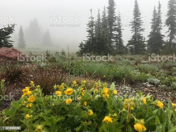 Photo of fleeting alpine flowers