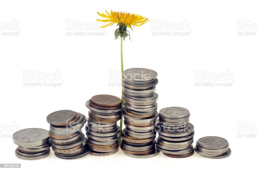 Fleur de pissenlit poussant dans des piles de pièces de monnaie - Zbiór zdjęć royalty-free (Bez ludzi)