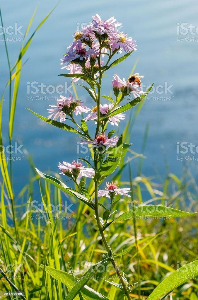 fleur - Photo