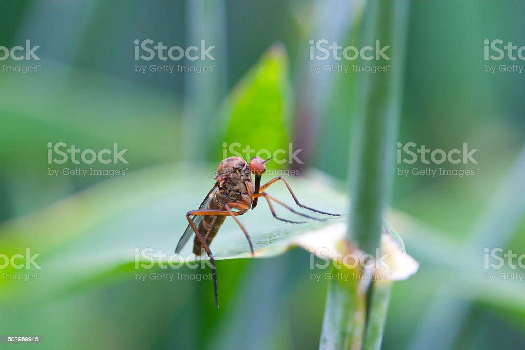 Fliege auf einem Blatt stock photo