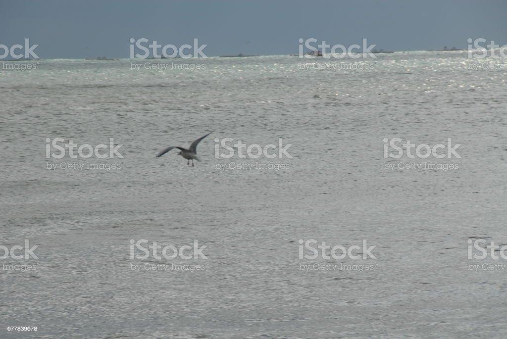 Fliegende Möwen am Mittelmeer in Spanien royalty-free stock photo