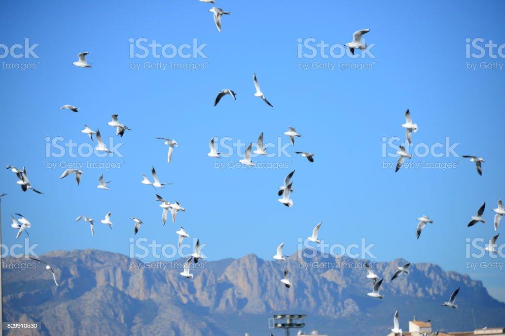 Fliegende Möwen am Mittelmeer in Spanien stock photo