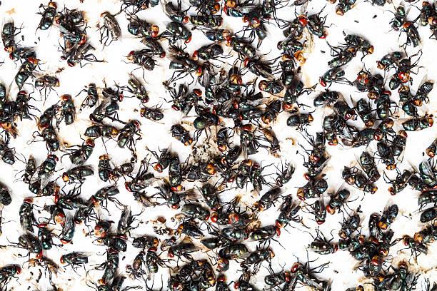 fliegt gefangene auf falle - mottenfalle stock-fotos und bilder