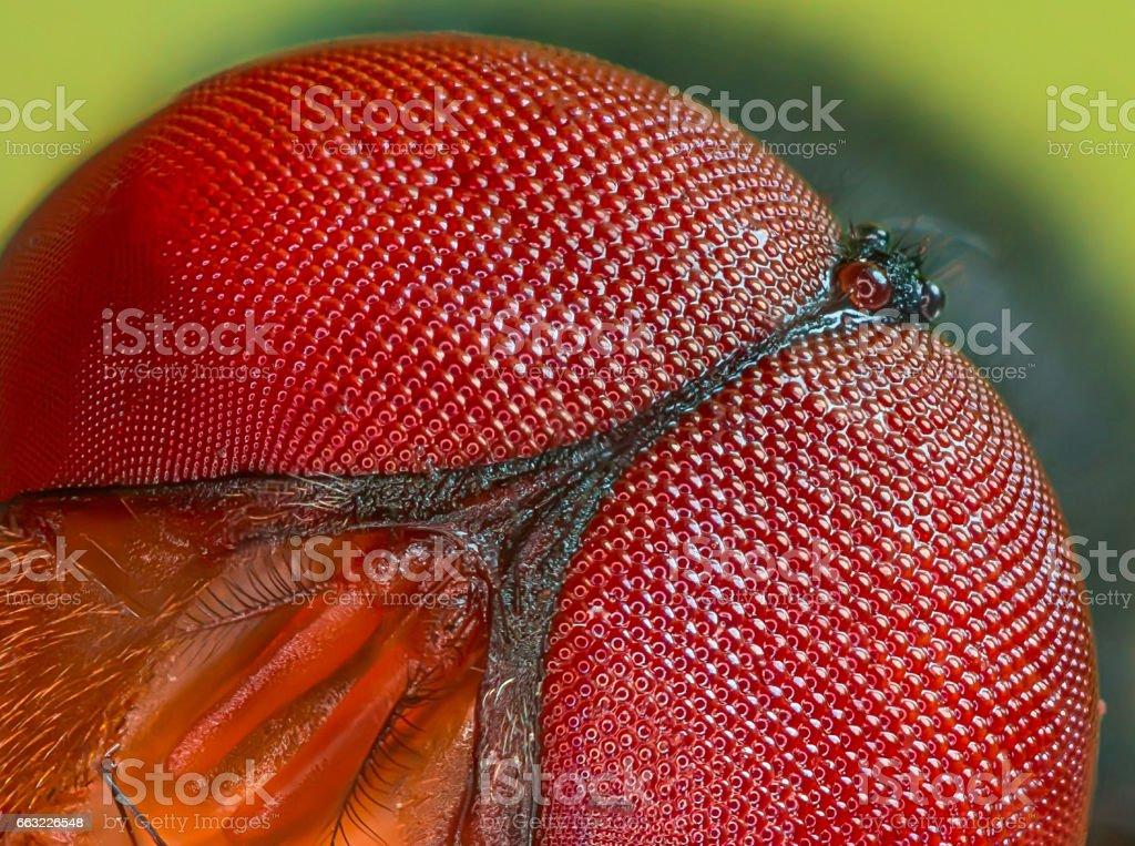 Flies Eye stock photo