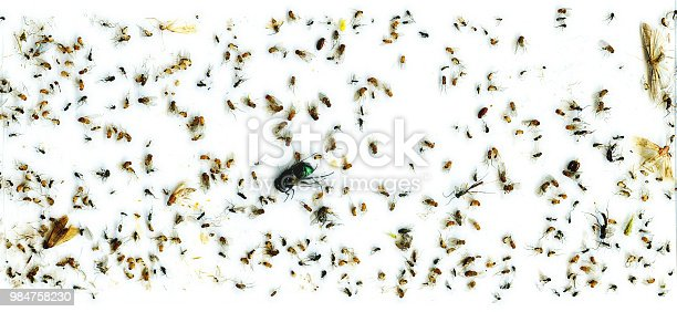 istock flies in flytrap caught closeup glue poison toxic trap 984758230