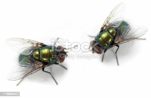 Macro shoot of domestic flies.
