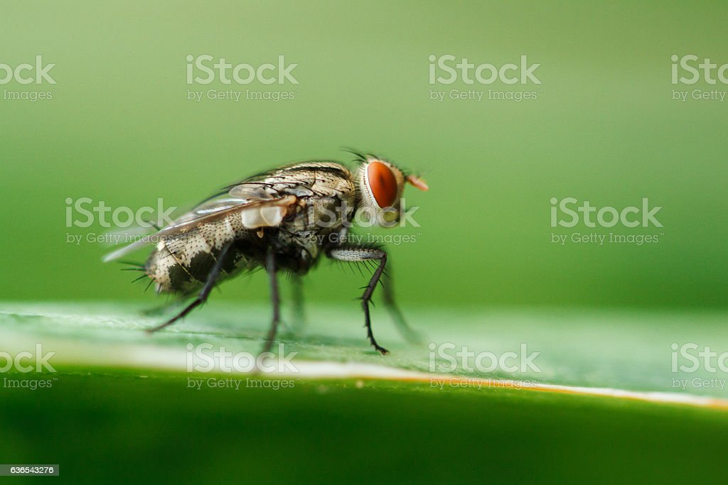 flies stock photo