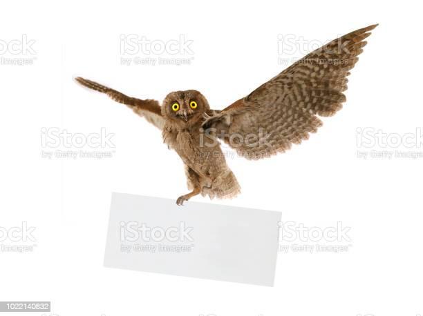 Flight european scops owl with sheet for a text writing picture id1022140832?b=1&k=6&m=1022140832&s=612x612&h=zuqqhoijyrqq6emasvcy q q6ffyb4yy z18pq7hhgg=