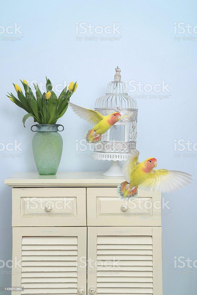 Flight of Two Lovebirds stock photo